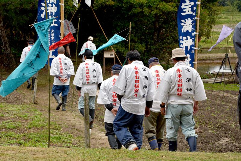 赤米御田植祭